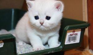 Білий кошеня на лотку