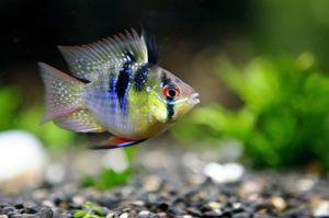 Рибка в акваріумі