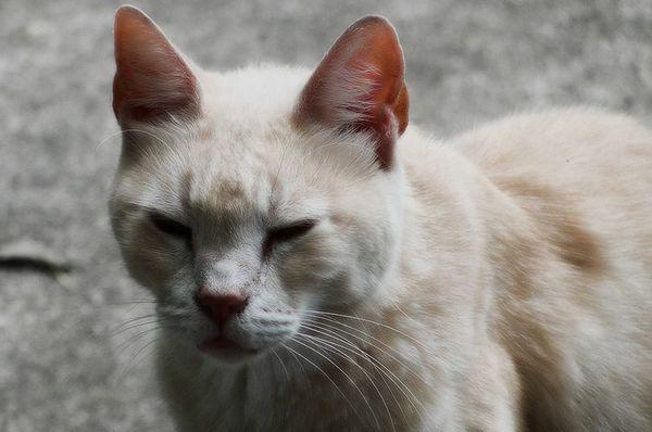 Хворобливий вигляд у кота