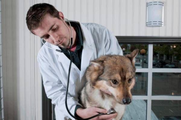 Arytmia - nepravidelný srdcový rytmus u psov