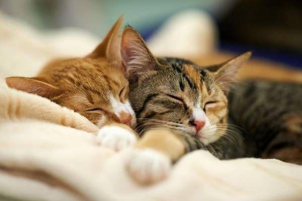 Artritída u mačiek: príčiny a liečba