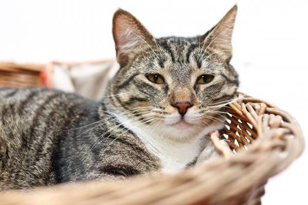 Artróza u mačiek - príčiny a starostlivosť