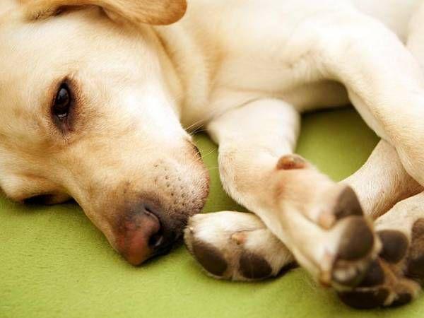 Artróza u psov - typy, príčiny a starostlivosť