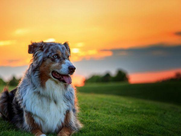 Який характер у собак