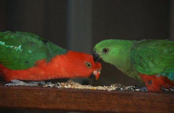 папуги їдять