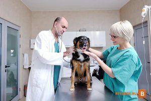 Огляд вихованця ветеринаром