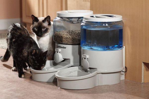Автоматична годівниця і напувалка для кішок