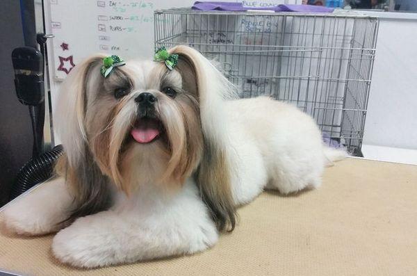 Азіатський стиль стрижки собак