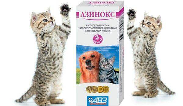 Azinox pre mačky: prehľad liekov