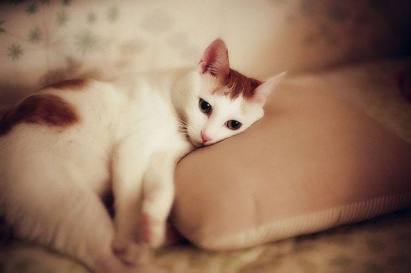сумна кішка
