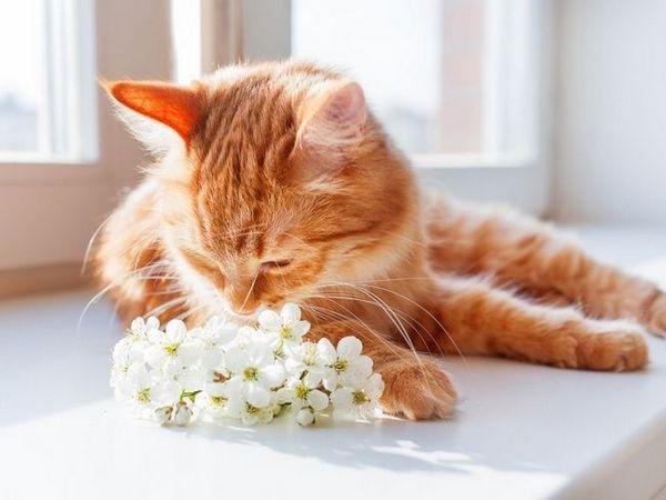 Babezióza - praktické alebo mýtické ochorenie mačiek
