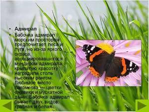 Admirálny motýľ: popis, jarný vzhľad, vlastnosti druhu
