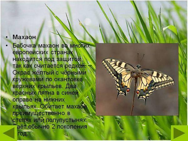 Забарвлення метелики адмірал