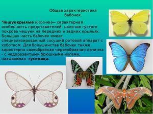 вороги метеликів