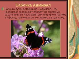 забарвлення метелики