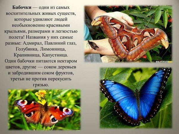 Зовнішній вигляд метелики