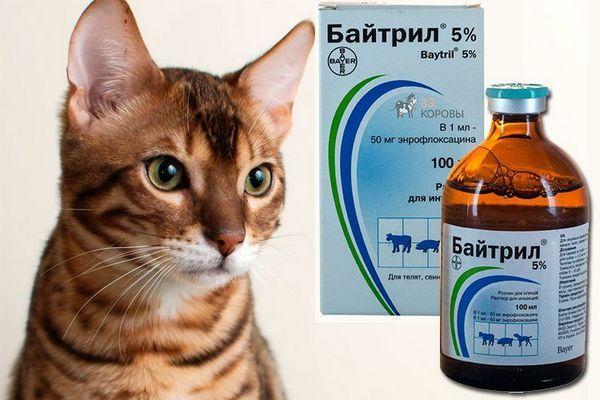 Байтрил для кішок
