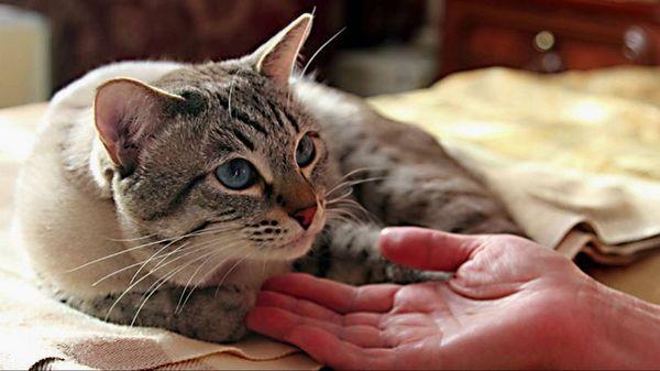 Гарний кіт