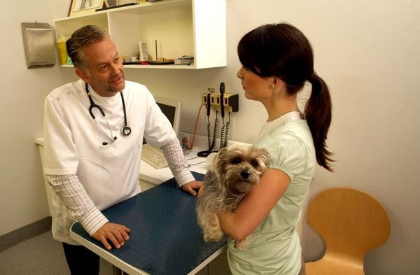 Обстеження собаки у ветеринара