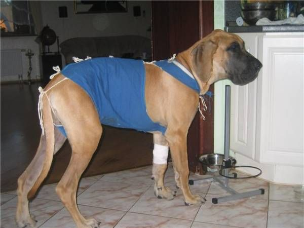 Obväz pre psov: účel a spôsoby výroby