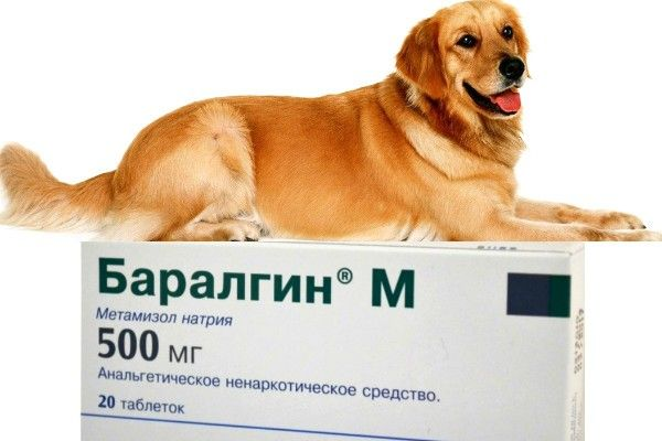 Baralgin pre psov: popis lieku a jeho použitia