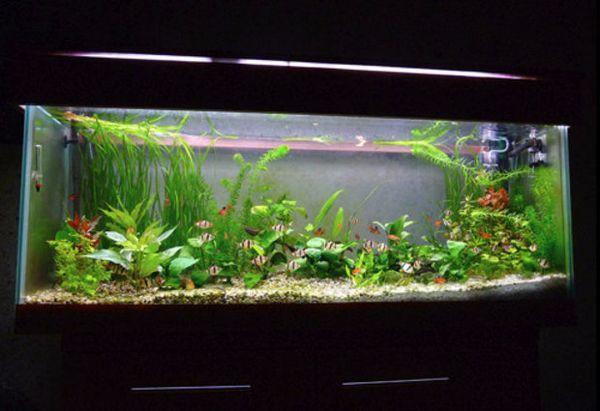 Вимоги до акваріуму