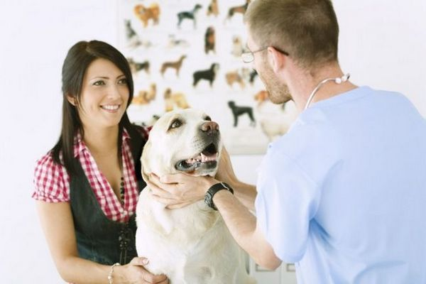 Bartonelóza u psov: vlastnosti choroby a liečba