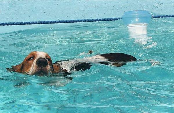 купання