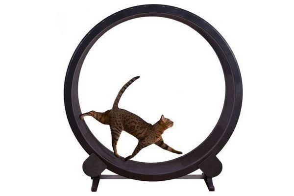 Бігове колесо для кішки своїми руками
