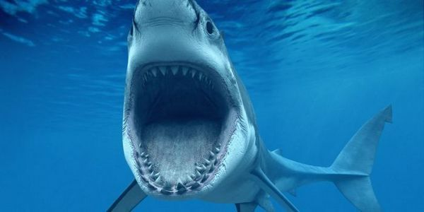 Čeľuste bieleho žraloka