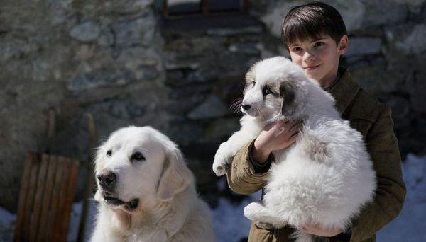 фільм про собаку Белль і Себастьян