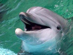 Поведінка беломордого дельфіна