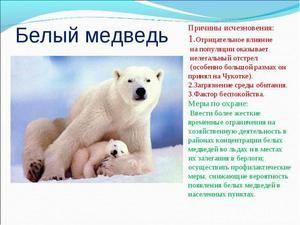 Ľadové medvede: ich biotop a všeobecné vlastnosti