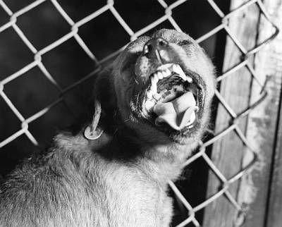 Besnota u psov: príznaky a prevencia