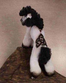Божевільна собача стрижка з малюнком