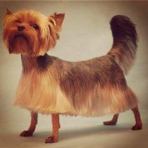 Божевільна стрижка собаки