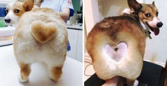 Собаки з вистреженнимі сердечками на попі