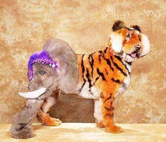 Собака зі стрижкою під слона і тигра одночасно