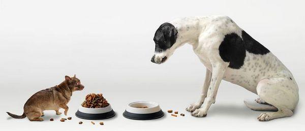 Krmivo pre psy bez obilia