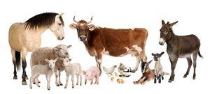 захворювання худоби