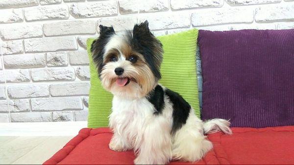 ласкавий пес