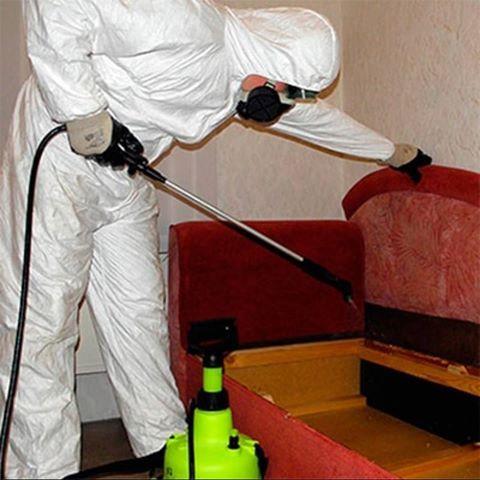 Обробляють приміщення від комах
