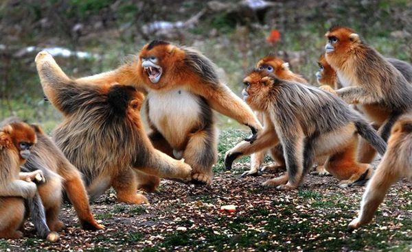 Zvieracie boje vo voľnej prírode