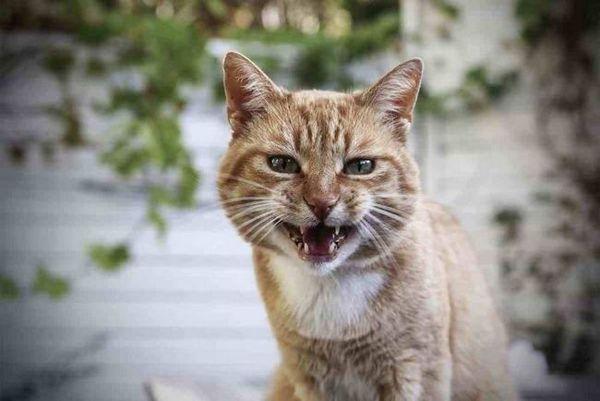 Majú mačky besnotu?