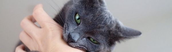 Ochorenie mačacieho škrabanca - príznaky, liečba a prvá pomoc