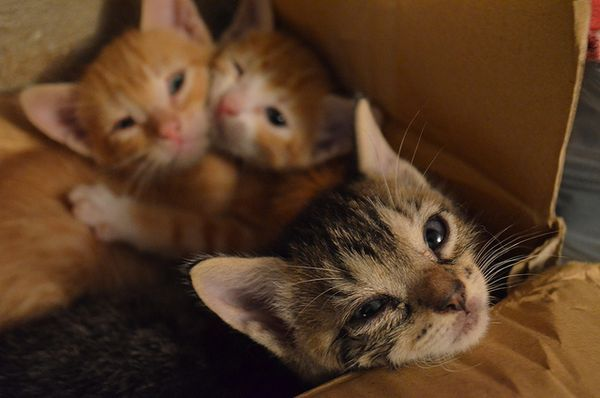 Частіше страждають кошенята