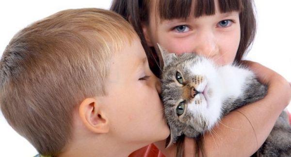 Choroby mačiek a ľudí: realita a predsudky