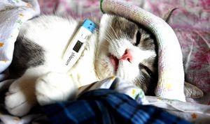 Перелік симптомів захворювання кішок