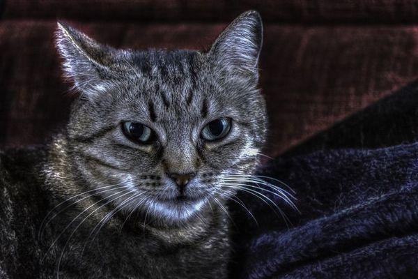 Choroby mačiek: tabuľka príznakov