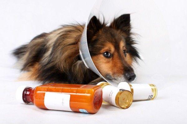 Kožné choroby u psov: klinická prezentácia a diagnostika